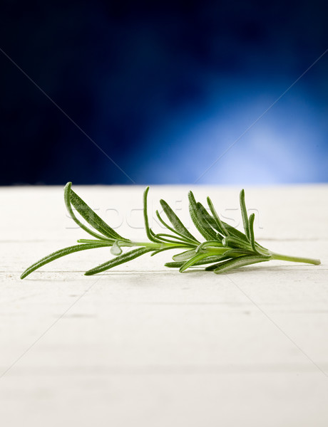 Rosemary highlighted by spot light Stock photo © Francesco83