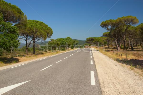 дороги Средиземное море пейзаж асфальт типичный соснового Сток-фото © frank11