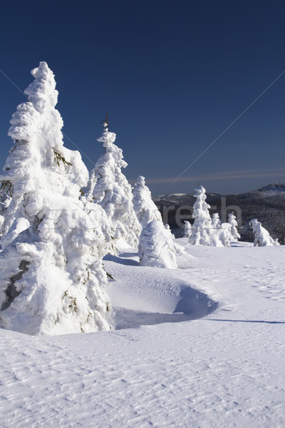 Winter view of snow covered trees Stock photo © frank11
