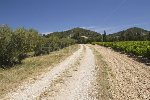 A dirt road lined with vineyards and olive trees. Stock photo © frank11