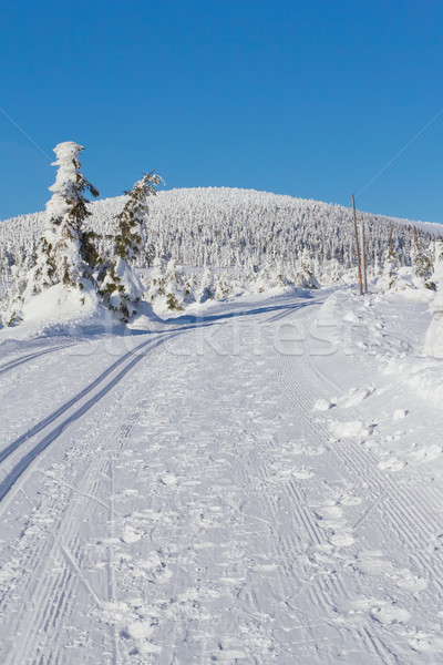 Winter mountain landscape scenery with cross country skiing way Stock photo © frank11