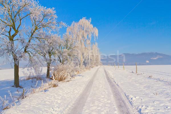 Carretera invierno campo árboles República Checa Foto stock © frank11