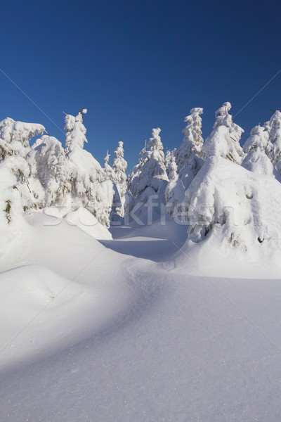 Invierno vista nieve cubierto árboles montana Foto stock © frank11
