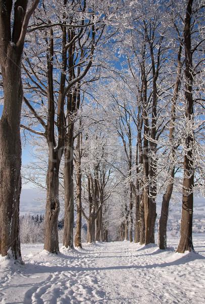 View of the winter trees, Calvary  Stock photo © frank11