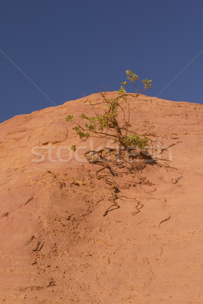Tree growing on an orange ocher hill Stock photo © frank11