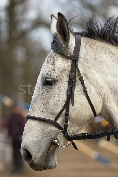 Portré fehér ló fej szabadtér arc ajtó Stock fotó © frank11
