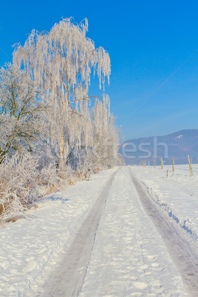 Campagne route hiver domaine arbres Photo stock © frank11