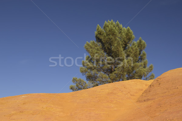 Pine tree growing on an orange ocher hill Stock photo © frank11