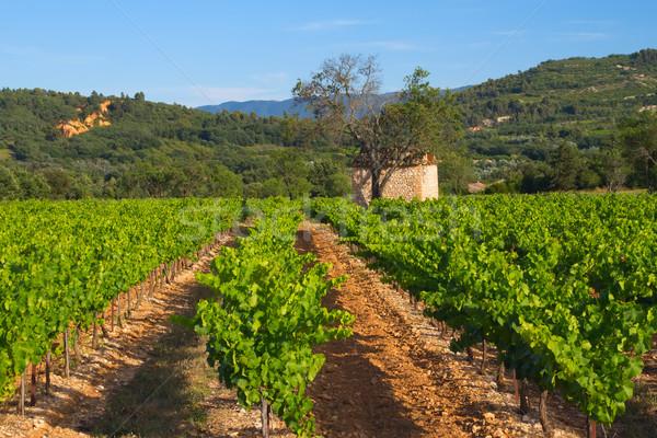 Landscape with vineyard Stock photo © frank11