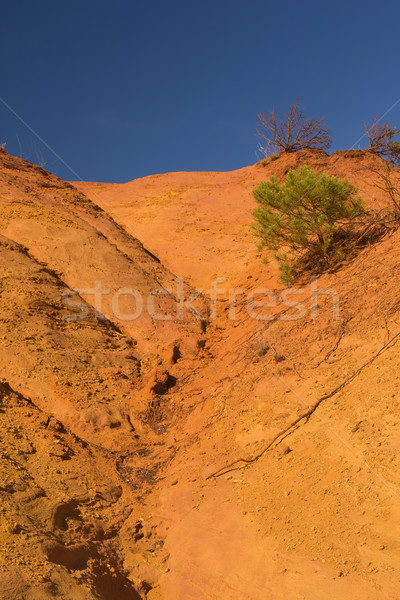 Colorful landscape with tree. Stock photo © frank11