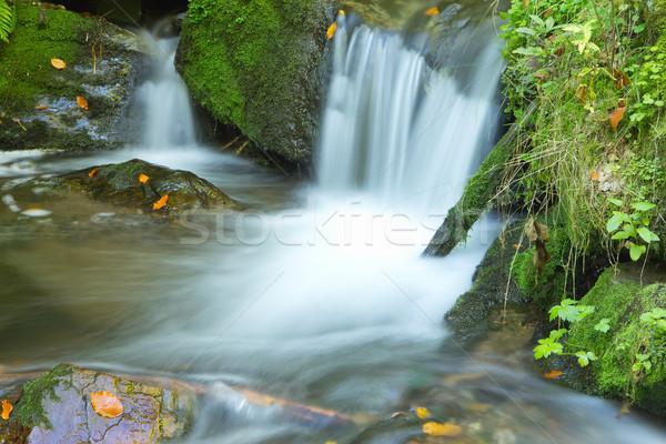 потока осень лес мирный Чешская республика Сток-фото © frank11