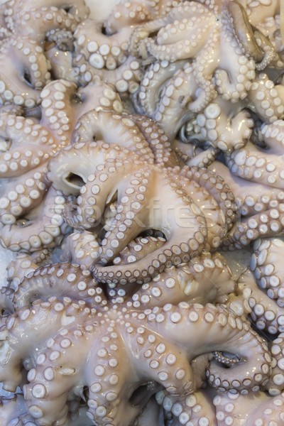 Fresh octopuses prepared to sell at the market Stock photo © frank11