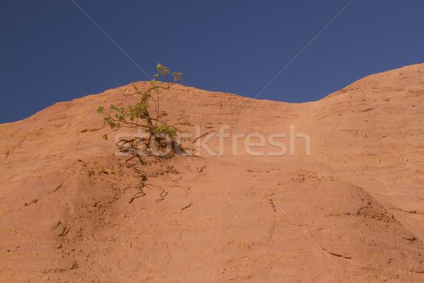 дерево растущий оранжевый холме холмы Blue Sky Сток-фото © frank11