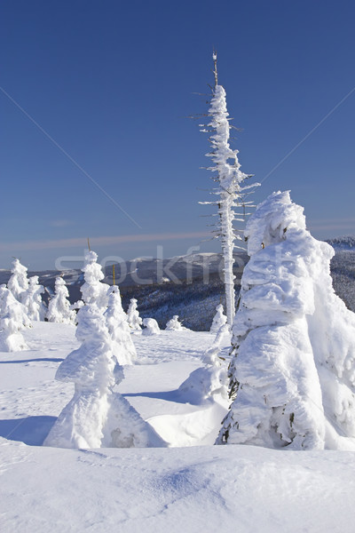Invierno vista nieve cubierto árboles montanas Foto stock © frank11
