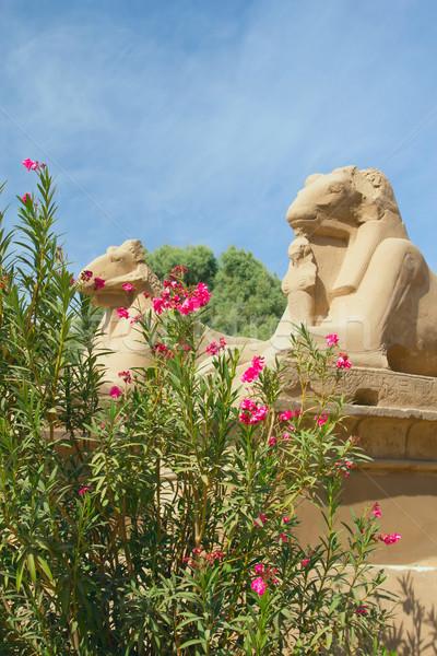 вход храма Египет Луксор передний план Сток-фото © frank11