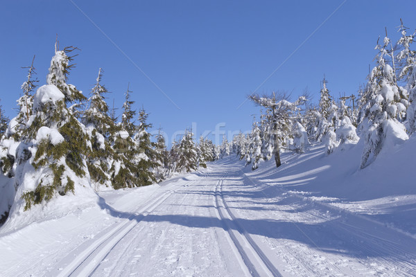 Winter mountain landscape with cross country skiing way.  Stock photo © frank11
