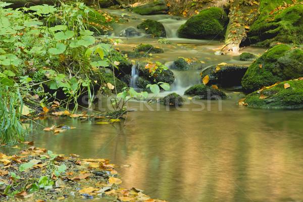 Folyik folyam ősz erdő békés Csehország Stock fotó © frank11