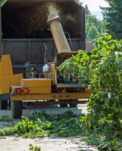 Stock photo: A Man Putting Branches in a Wood Chipper