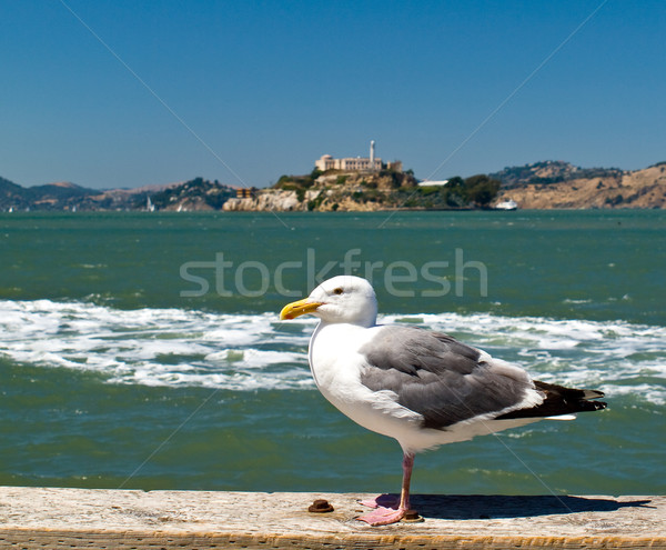 Seagull in San Francisco at Pier 39 with Alcatraz Prison Stock photo © Frankljr