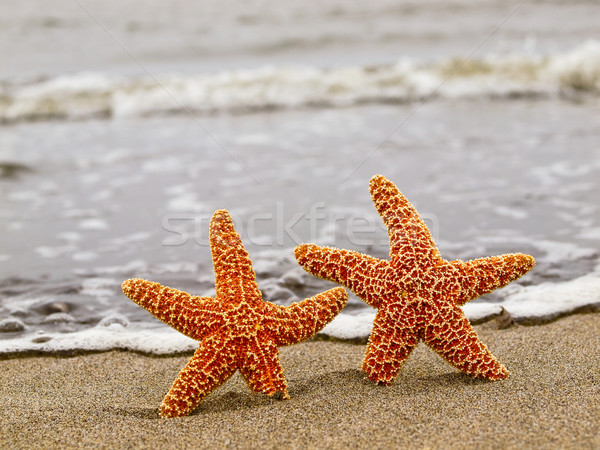 Two Orange Starfish on the Shoreline with Waves in the Backgroun Stock photo © Frankljr