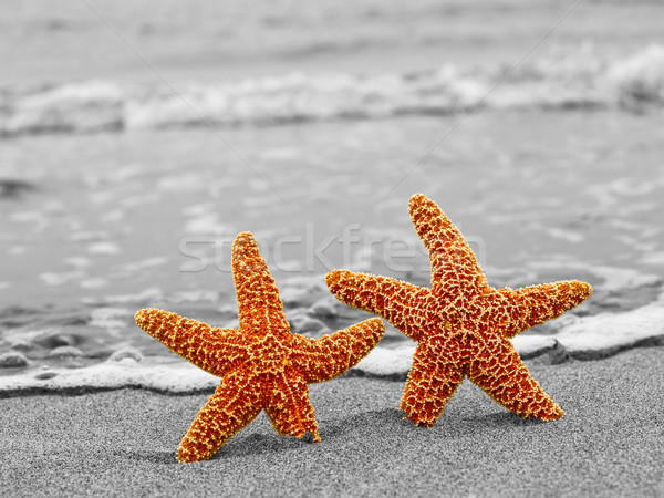 Two Orange Starfish Against a Black and White Shoreline Stock photo © Frankljr