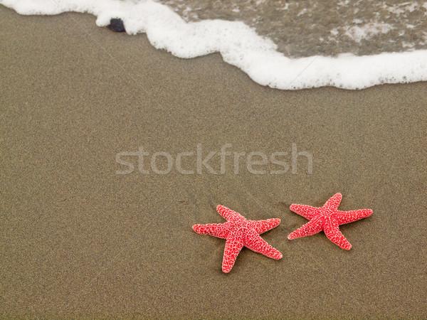 Dois starfish vermelho peixe mar fundo Foto stock © Frankljr