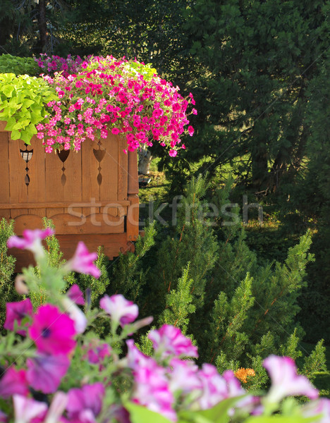 Pretty Purple and Violet Petunias on a Balcony Garden Stock photo © Frankljr