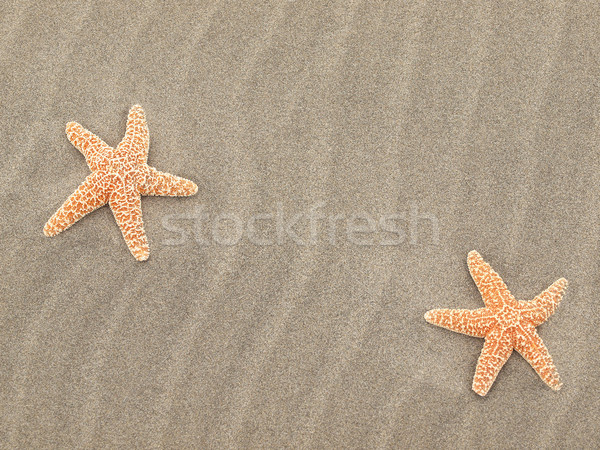 Two Starfish on the Beach with Windswept Sand Ripples  Stock photo © Frankljr