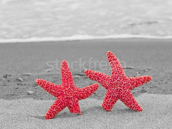 два Starfish красный черно белые пляж рыбы Сток-фото © Frankljr