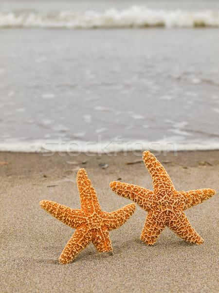 Dos estrellas de mar peces mar fondo verano Foto stock © Frankljr