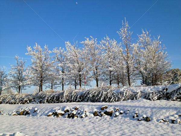 Inverno gelo alberi terra giorno cielo Foto d'archivio © Frankljr