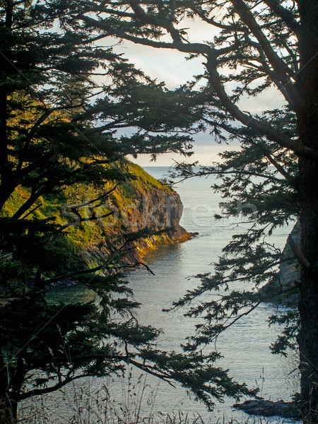 A View of an Ocean Cliff Framed by Evergreen Trees Stock photo © Frankljr