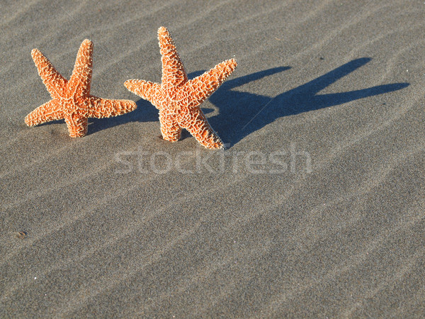 Deux starfish ombres plage sable poissons Photo stock © Frankljr