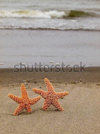 Dois starfish arco-íris peixe mar fundo Foto stock © Frankljr