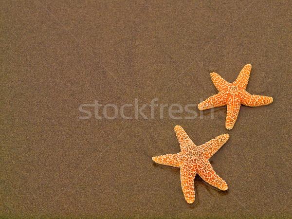 Dois starfish molhado praia peixe sol Foto stock © Frankljr