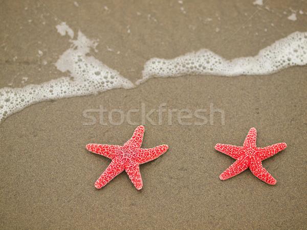 Iki denizyıldızı kırmızı balık deniz arka plan Stok fotoğraf © Frankljr