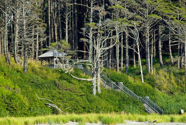 Orman merdiven bahar çim ahşap doğa Stok fotoğraf © Frankljr