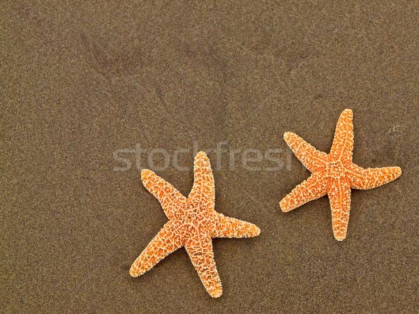 2 ヒトデ ぬれた 砂浜 魚 太陽 ストックフォト © Frankljr