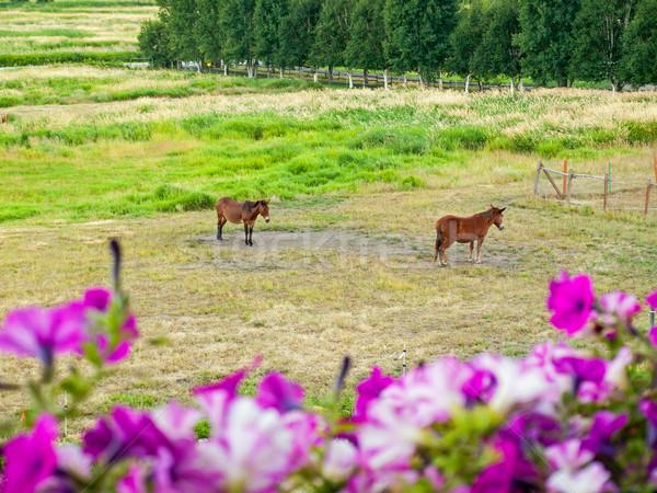 Cavalli campo montagna cielo baby natura Foto d'archivio © Frankljr