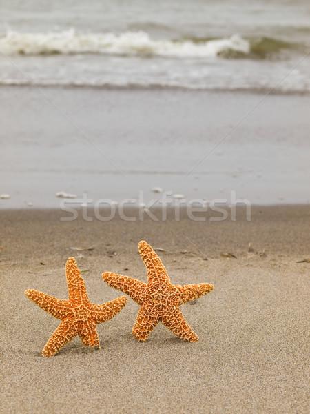 Deux starfish poissons mer fond été Photo stock © Frankljr