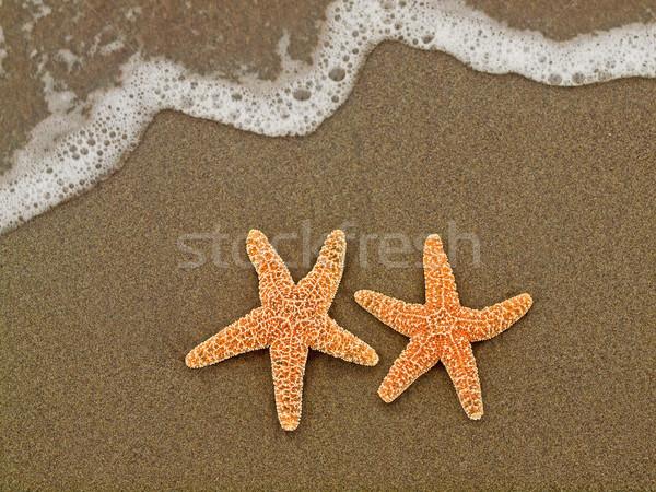 Twee zeester vis zee achtergrond zomer Stockfoto © Frankljr
