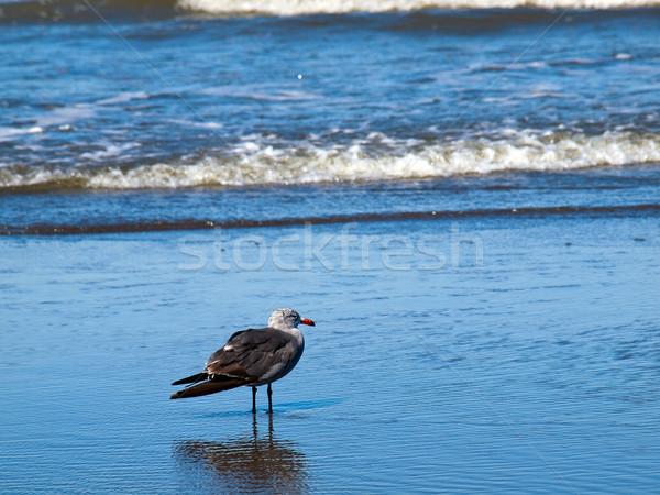 Választék égbolt természet kék homok élet Stock fotó © Frankljr