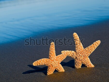Stock photo: Two Starfish with Shadows on the Beach with Ocean Waves in the Background