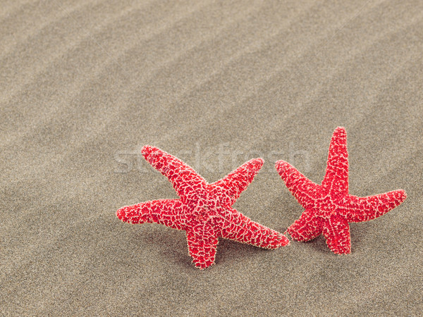 Two Red Starfish on the Beach with Windswept Sand Ripples Stock photo © Frankljr