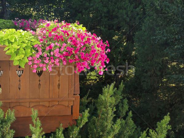 Bastante púrpura violeta balcón jardín madera Foto stock © Frankljr
