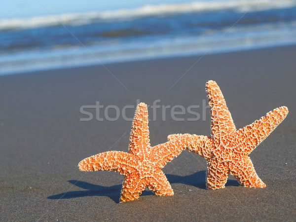 Two Starfish with Shadows on the Beach with Ocean Waves in the Background  Stock photo © Frankljr