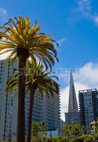 Palmeras urbanas moderna edificios San Francisco negocios Foto stock © Frankljr