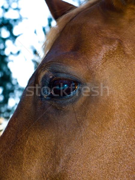 Paard portret bruin oog wolken Stockfoto © Frankljr