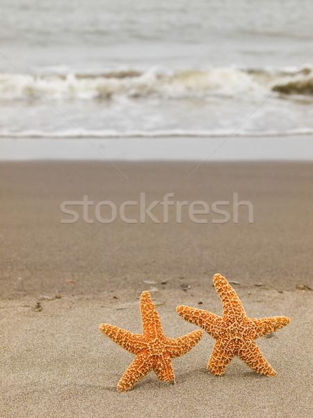 Stock photo: Two Starfish