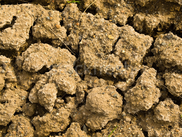 Parched and Cracked Dry Ground  Stock photo © Frankljr